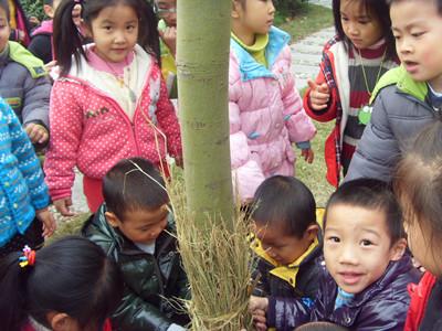 我给小树穿冬装——佘山幼儿园大班主题活动