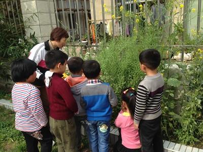 幼儿园种植园地喜获丰收