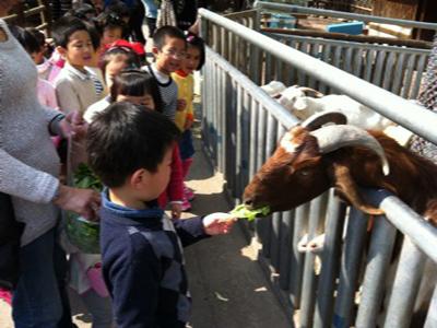 和动物做朋友——记打虎山路幼儿园参观动物岛活动