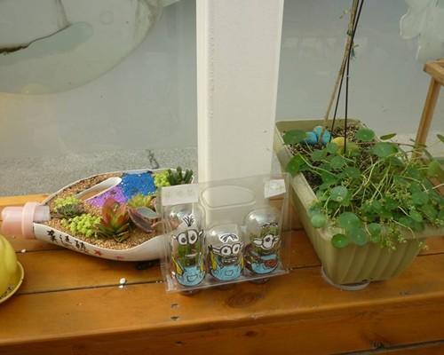 走近植物角,开启春之梦——泖港幼儿园开展植物角创设
