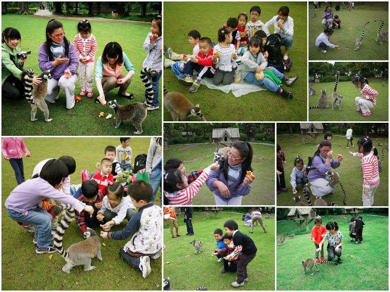 2012年5月9日,华山美术幼儿园中班组的孩子跟着老师走进了动物