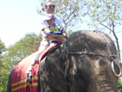 骑大象真好玩