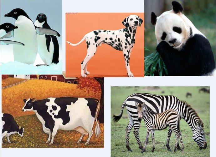 活动目标: 1、 在看看 、猜猜黑白皮毛动物的过程中,尝试了解、辨别各种动物皮毛不同的特征。 2、 在躲、藏、猜等过程中,更亲近、喜欢小动物。