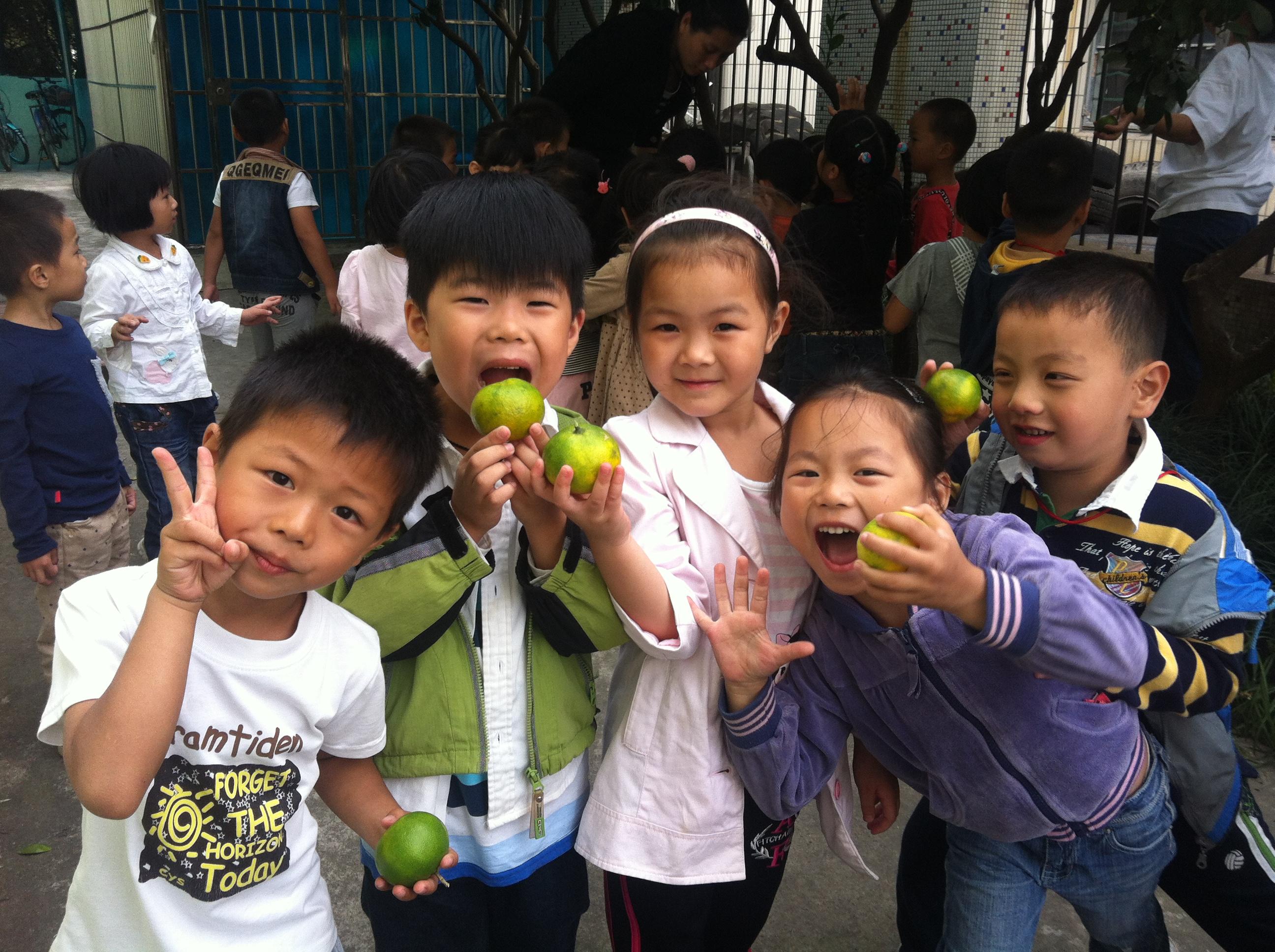 秋天到了,幼儿园的橘子也成熟啦,今天我们来到了幼儿园的橘子树前