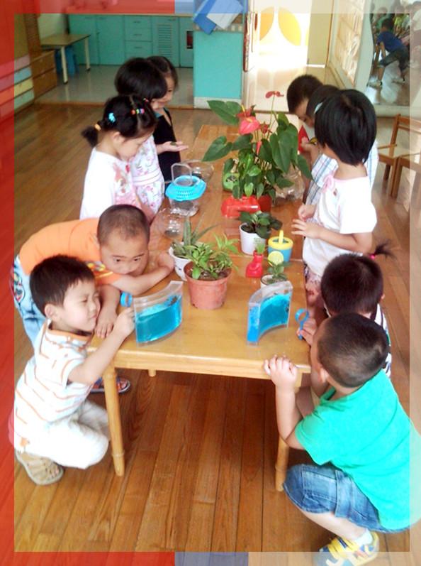 幼儿园区角小动物吃东西图片