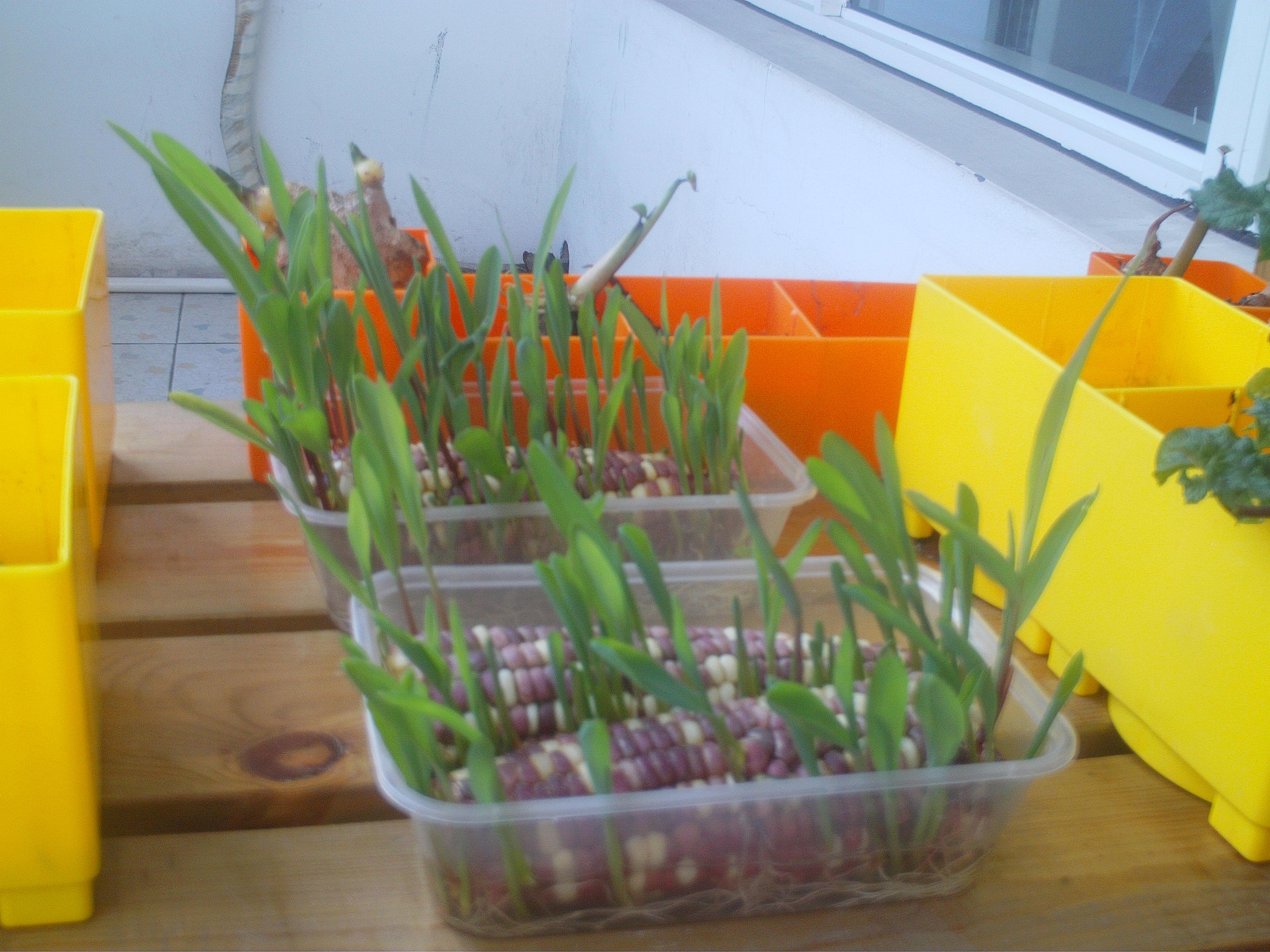 幼儿园玉米叶子手工制作