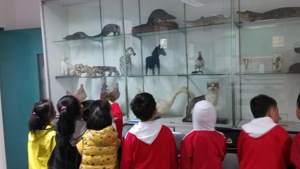 这是小学的标本室,我们看到了很多的动物标本,让我们能更仔细的观察动