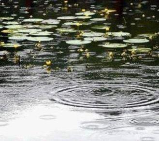 小雨点儿落在池塘里,激起了一圈一圈的小水波,真可爱!-信息详细 图片