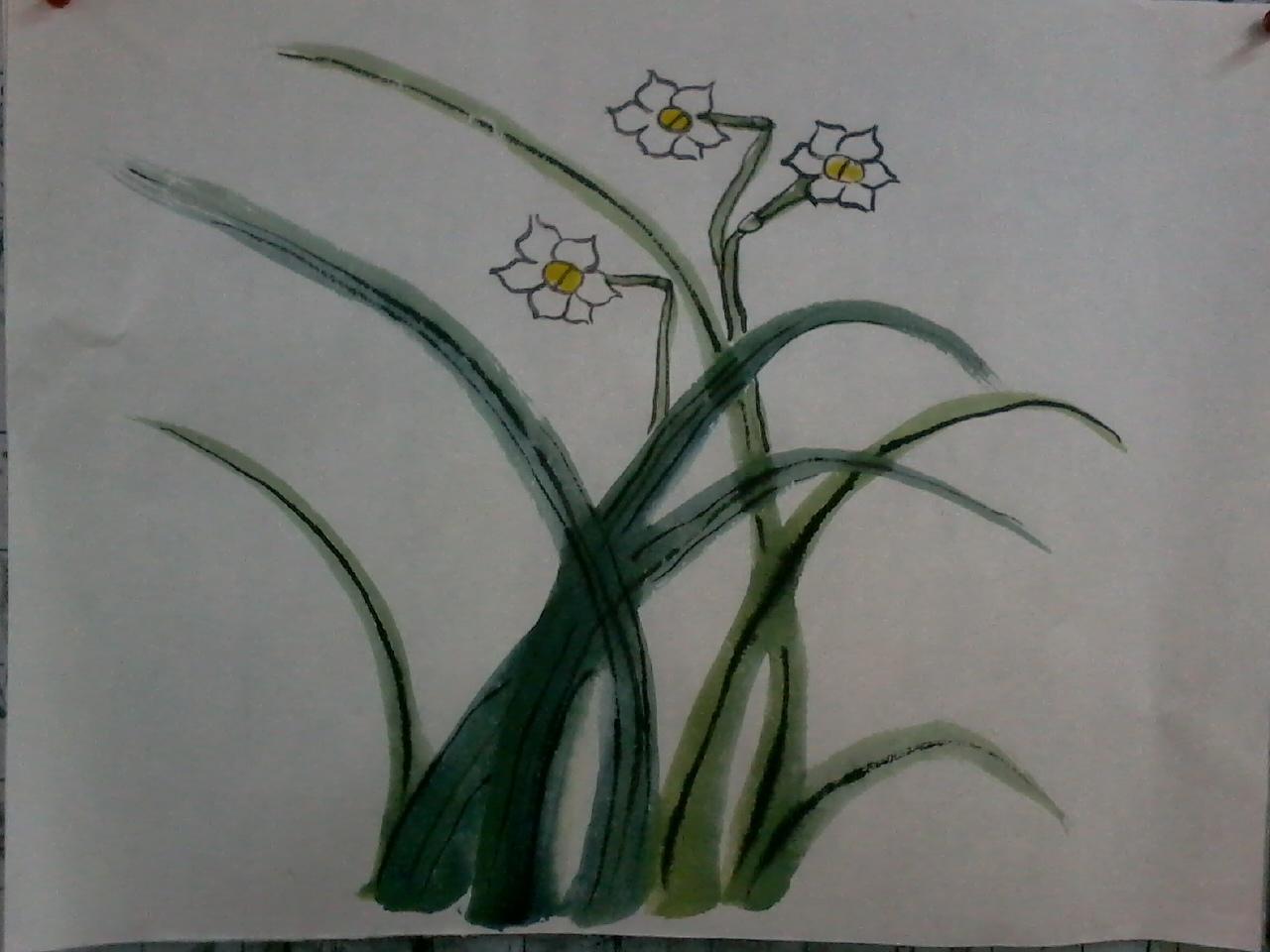 2,用大白云,中锋,墨勾画水仙花的花瓣(特别要注意花瓣的造型与数量)