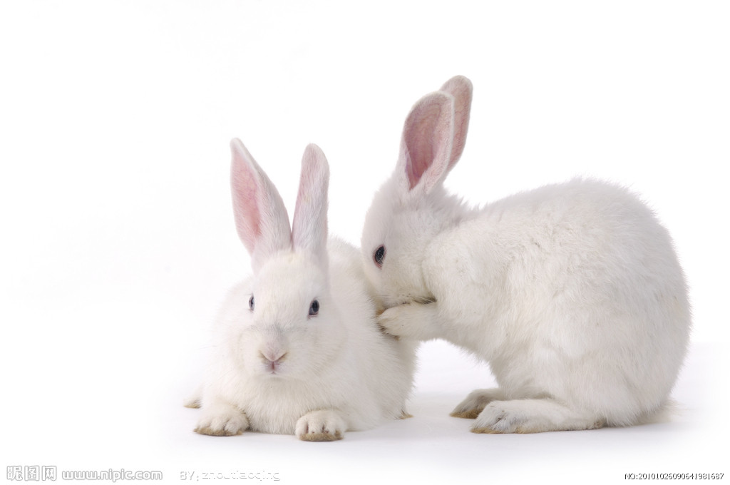 """近阶段我们将开展""""小兔乖乖""""主题活动,本主题中会以""""兔子""""为主线,通过童话故事""""小兔乖乖""""以及儿歌""""红眼睛""""、歌曲""""小兔乖乖""""、综合活动""""喂小兔""""等活动,引发他们对兔子关注的兴趣。"""