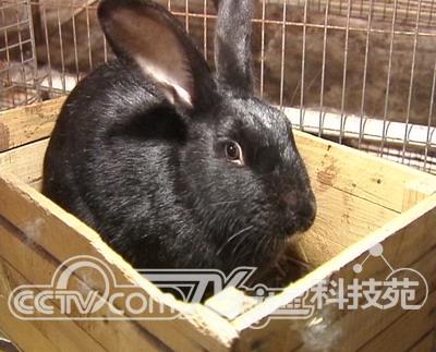 2,小兔子的眼睛都是红的吗?有哪些颜色的眼睛呢?