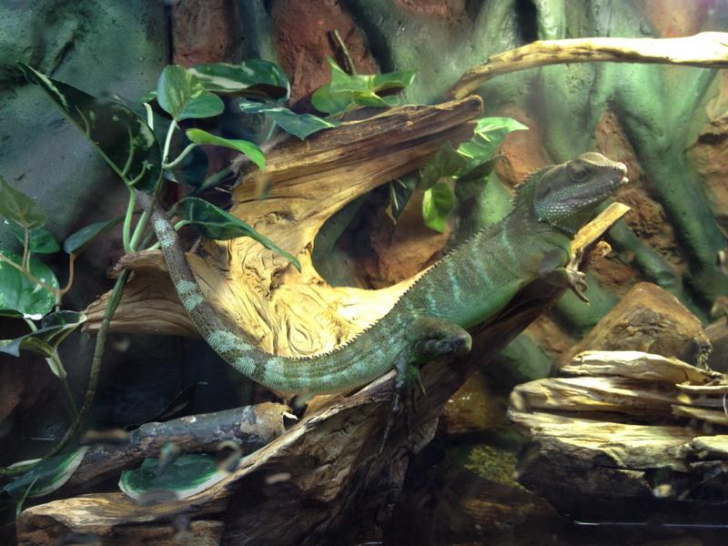 大蟒蛇很可怕,但我们一点也不害怕,够勇敢吧.