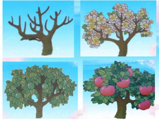 小乌龟把苹果树绑在背上,出发了. 走啊,走啊,苹果树开花了.