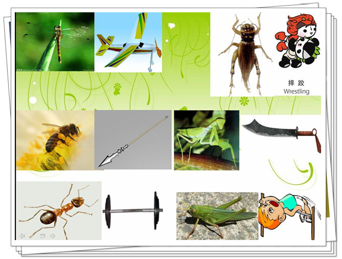 儿歌:昆虫运动会
