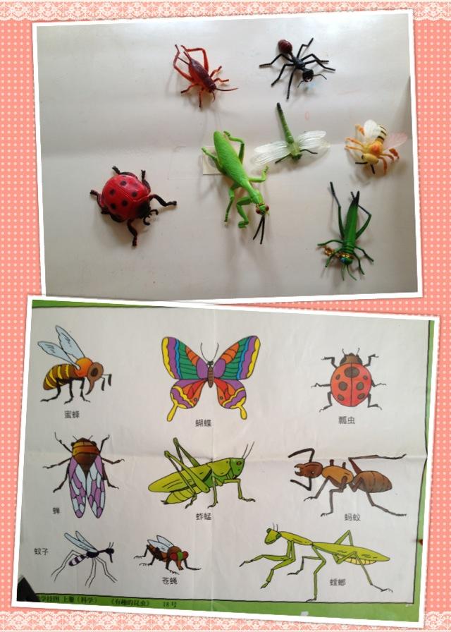 昆虫运动会