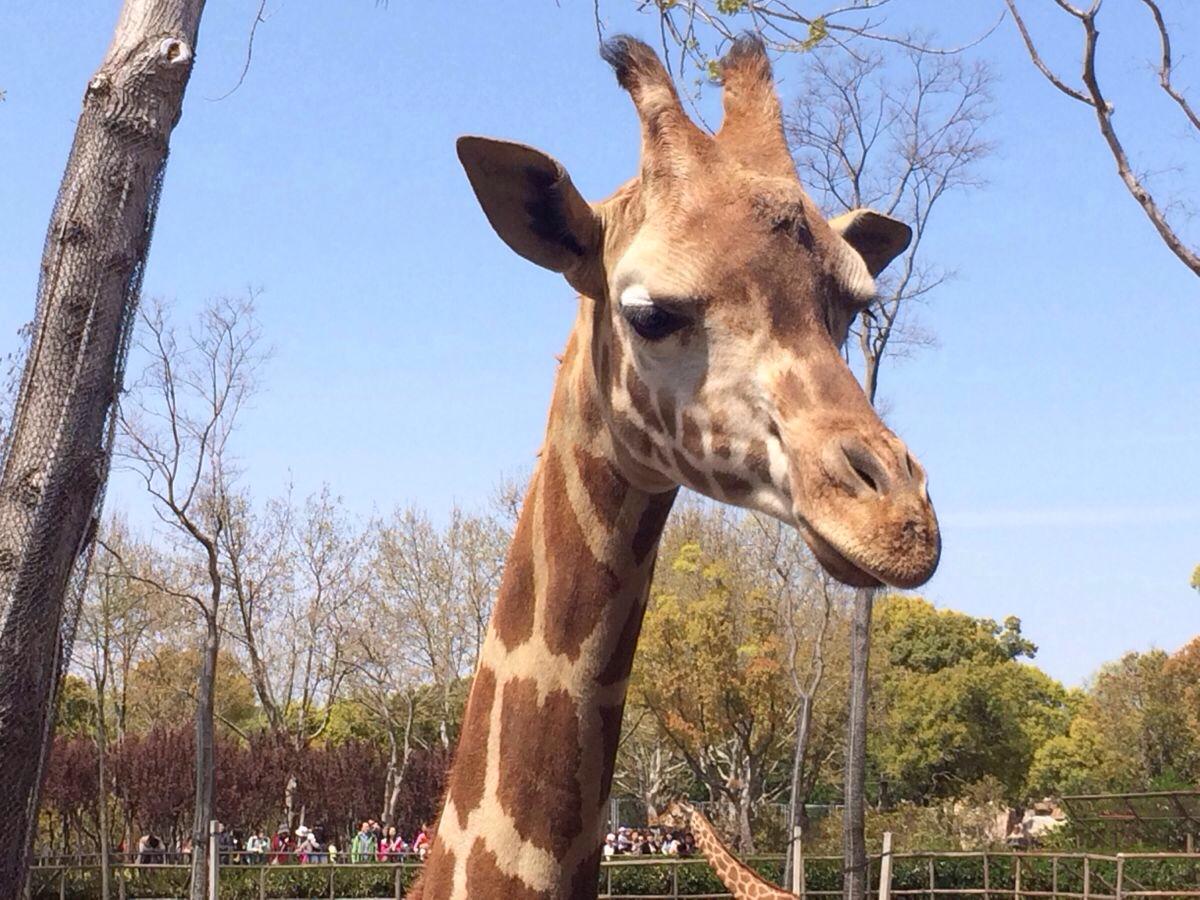 十月金秋,小朋友们到野生动物园游玩的时候,要注意以下安全事项哦