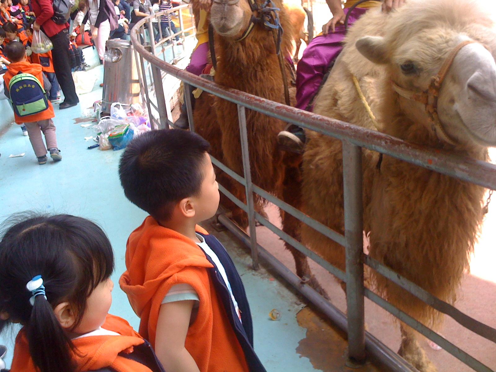 一天的活动在孩子们的欢声笑语中很快就结束了,通过这次参观动物园的