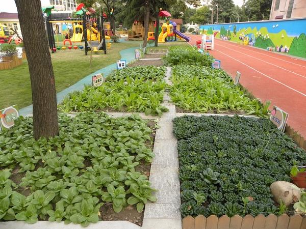 环保节能 v-19-1环保环境  幼儿园班级小菜园                  发布