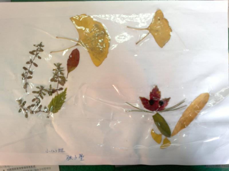 海绵纸树叶边框图片