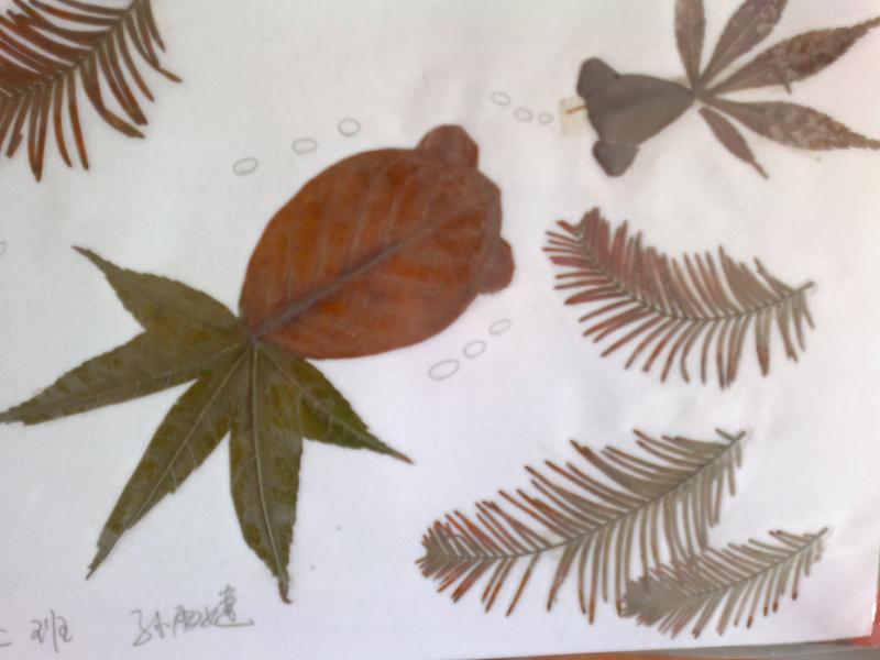 剪贴画树叶的制作方法