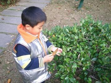 和常绿树的树叶比一比,颜色不同,厚薄不同,常绿树树叶是很光滑的.