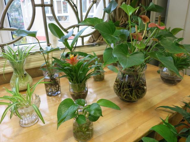幼儿园手工制作大全植物盆栽图片