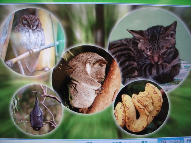 三,还有哪些动物是晚上睡觉的? 四,他们睡觉的姿势一样吗?