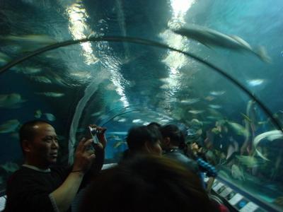 壁纸 海底 海底世界 海洋馆 水族馆 400_300