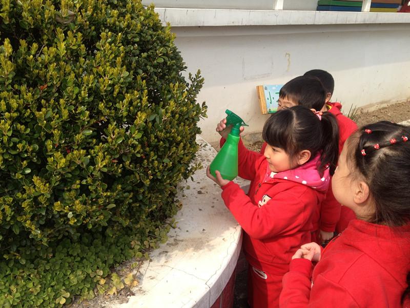 上海幼儿园中班植树节活动