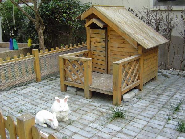 小动物之家
