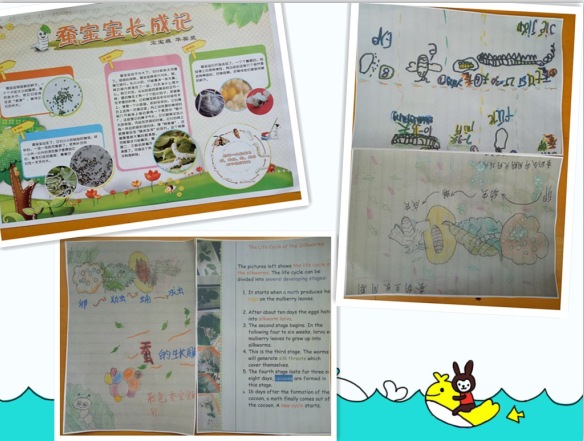 我们小朋友和爸爸妈妈家园共育自制了《蚕宝宝的一生》小报,孩子们从