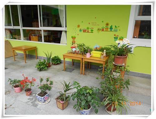 小角落,大世界——龙华幼儿园小班自然角评比侧影