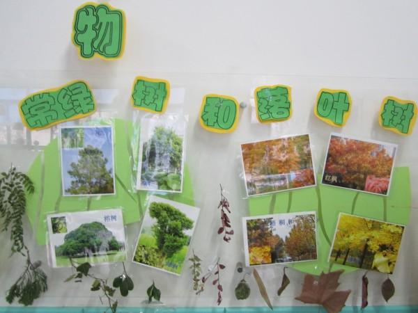 让幼儿区分常绿树与落叶树