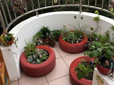 泖港幼儿园创意植物角——让孩子亲近自然