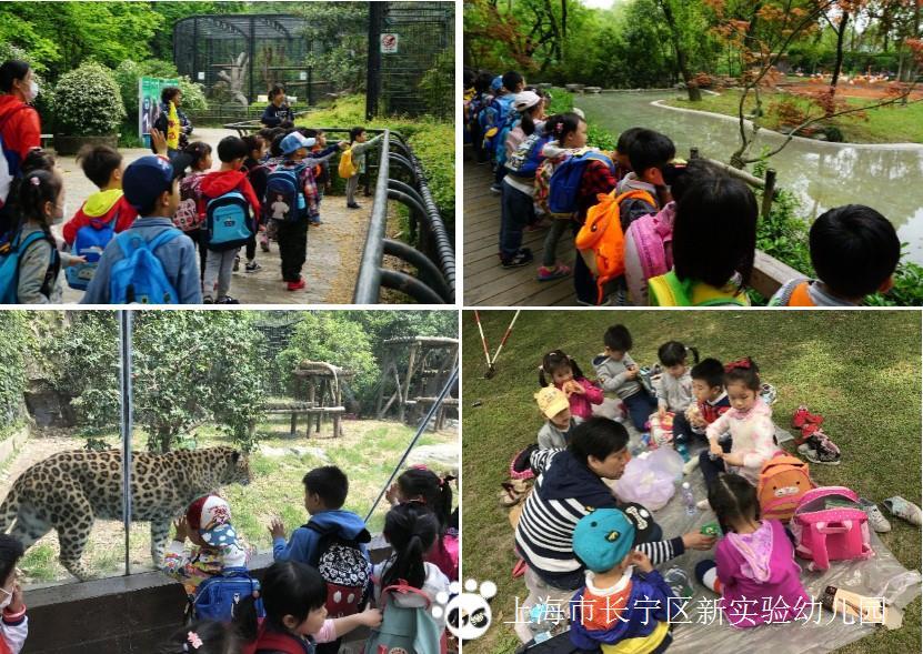 新实验幼儿园中班的孩子们和老师们一起踏上春游的旅程,前往上海动物
