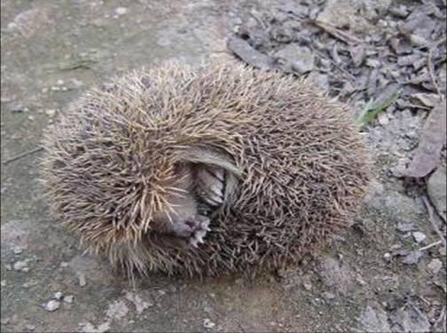 小动物怎么睡觉?